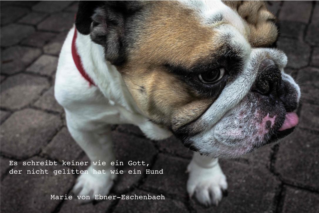 Zitate Montag Hund Und Gott Die Münchner Schreibakademie